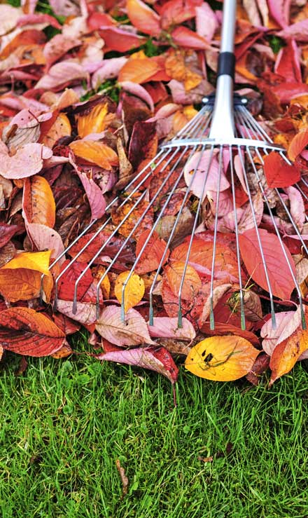 Perkins Landscaping  Fall Clean Up